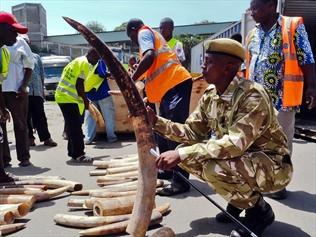 Kenyan Ivory Seized